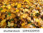 fallen trees in autumn in the... | Shutterstock . vector #1094320955