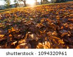 fallen trees in autumn in the... | Shutterstock . vector #1094320961
