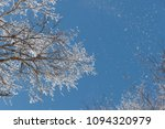 snow on branches against the... | Shutterstock . vector #1094320979