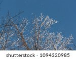 snow on branches against the... | Shutterstock . vector #1094320985
