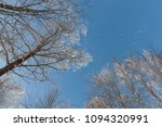 snow on branches against the... | Shutterstock . vector #1094320991