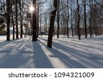trunks of tall trees on a... | Shutterstock . vector #1094321009