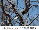 snow on branches against the... | Shutterstock . vector #1094321015