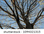 dry tree branches against the... | Shutterstock . vector #1094321315