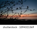 branches of plants in the... | Shutterstock . vector #1094321369