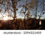 photo of flowering plant... | Shutterstock . vector #1094321405