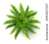 top view of fern in a pot.... | Shutterstock .eps vector #1094327237