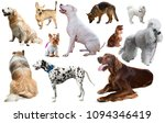 Collection Of Various Dog...