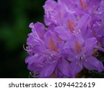 close up detail of a beautiful... | Shutterstock . vector #1094422619