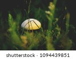 champignon mushroom grass... | Shutterstock . vector #1094439851
