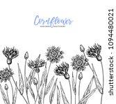 hand drawn wild hay flowers.... | Shutterstock .eps vector #1094480021