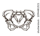 hip joint sketch for tattoo ... | Shutterstock .eps vector #1094481521