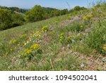 wildflowers   flora of the...   Shutterstock . vector #1094502041