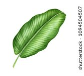 realistic tropical botanical... | Shutterstock . vector #1094504507