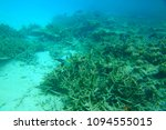 Small photo of Amazing underwater world view. Blue water, white sand and dead coral reefs of Indian Ocean. Snorkeling. Maldives.