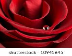 macro of red rose with water... | Shutterstock . vector #10945645