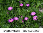 flowers of turkey. flora of...   Shutterstock . vector #1094622359