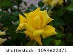 flowers of turkey. flora of...   Shutterstock . vector #1094622371