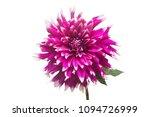 dahlia flower in several colors ...   Shutterstock . vector #1094726999