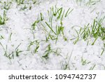 Spring Hail On Green Lawn