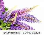 lilac flowers on a white... | Shutterstock . vector #1094776325
