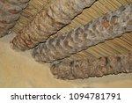 monastery st.antoniy egypt  3d... | Shutterstock . vector #1094781791