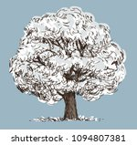 a deciduous tree in a snowy... | Shutterstock .eps vector #1094807381