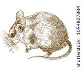 vector antique engraving... | Shutterstock .eps vector #1094807804
