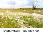 Small photo of Beautiful stipa feather grass or needle-grass meadow. Blue sky on background. Warm countryside scenic landscape