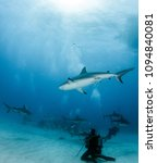 caribbean reef shark at the... | Shutterstock . vector #1094840081