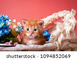red maine coon kitten sitting...   Shutterstock . vector #1094852069