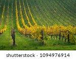 vineyard in the adelaide hills  ... | Shutterstock . vector #1094976914