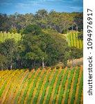 vineyard in the adelaide hills  ... | Shutterstock . vector #1094976917