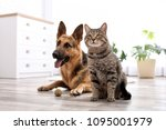 adorable cat and dog resting... | Shutterstock . vector #1095001979
