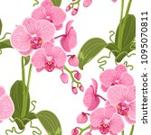 pink purple phalaenopsis moth... | Shutterstock .eps vector #1095070811
