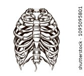 human ribs sketch for tattoo ... | Shutterstock .eps vector #1095095801