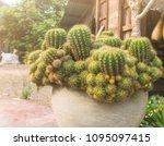 group of beautiful cactus... | Shutterstock . vector #1095097415