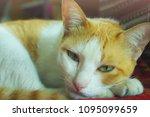 close up cat looking ... | Shutterstock . vector #1095099659