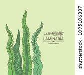 laminaria  laminaria seaweed ... | Shutterstock .eps vector #1095106337