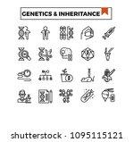 genetics and inheritance... | Shutterstock .eps vector #1095115121
