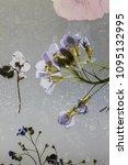 dry flowers details   Shutterstock . vector #1095132995
