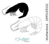 silhouette shrimp. linear...   Shutterstock .eps vector #1095135131