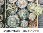 group of cactus in a pot on... | Shutterstock . vector #1095147941