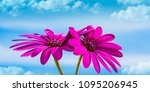 flowers under the blue sky | Shutterstock . vector #1095206945