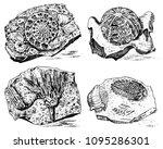 Fragment Fossils  Skeleton Of...