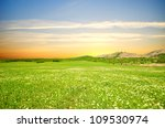 lawn with green grass  lush... | Shutterstock . vector #109530974