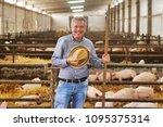 a farmer carefully raises his... | Shutterstock . vector #1095375314