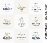 premium quality retro cattle... | Shutterstock .eps vector #1095376004