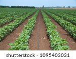 agriculture and irrigation ... | Shutterstock . vector #1095403031