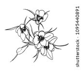 drawing of a bunch of crocuses... | Shutterstock .eps vector #1095440891